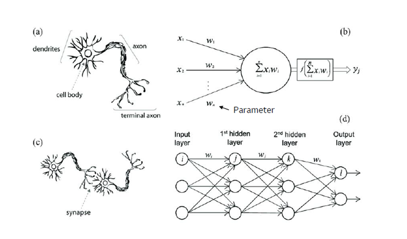 Comparison of human neural networks and AI computational processing methods